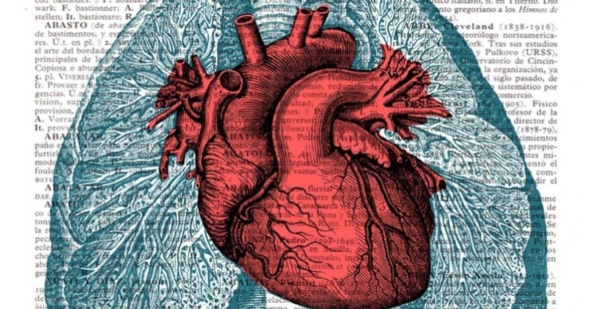 12Datos sorprendentes del corazón humano que niteimaginabas