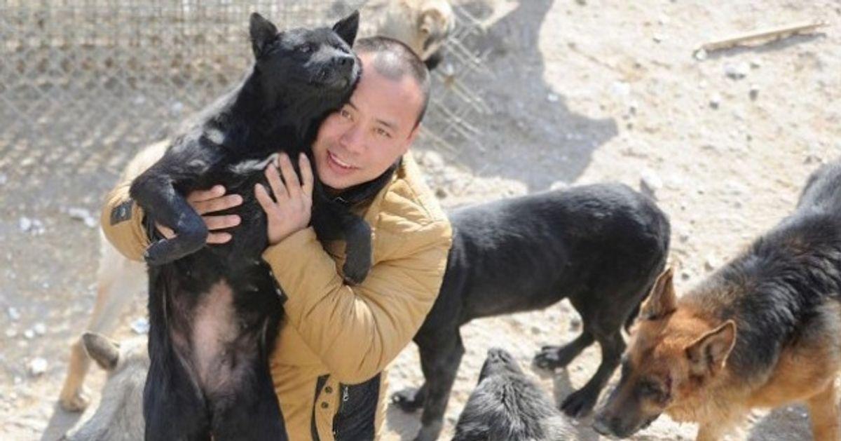 Este millonario invierte sufortuna enrescatar perros abandonados
