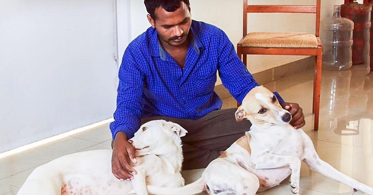 Este hombre pasó 10años ahorrando dinero para ayudarles alos animales sin hogar