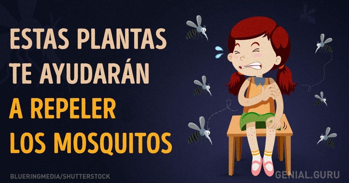 Estas plantas teayudarán arepeler los mosquitos