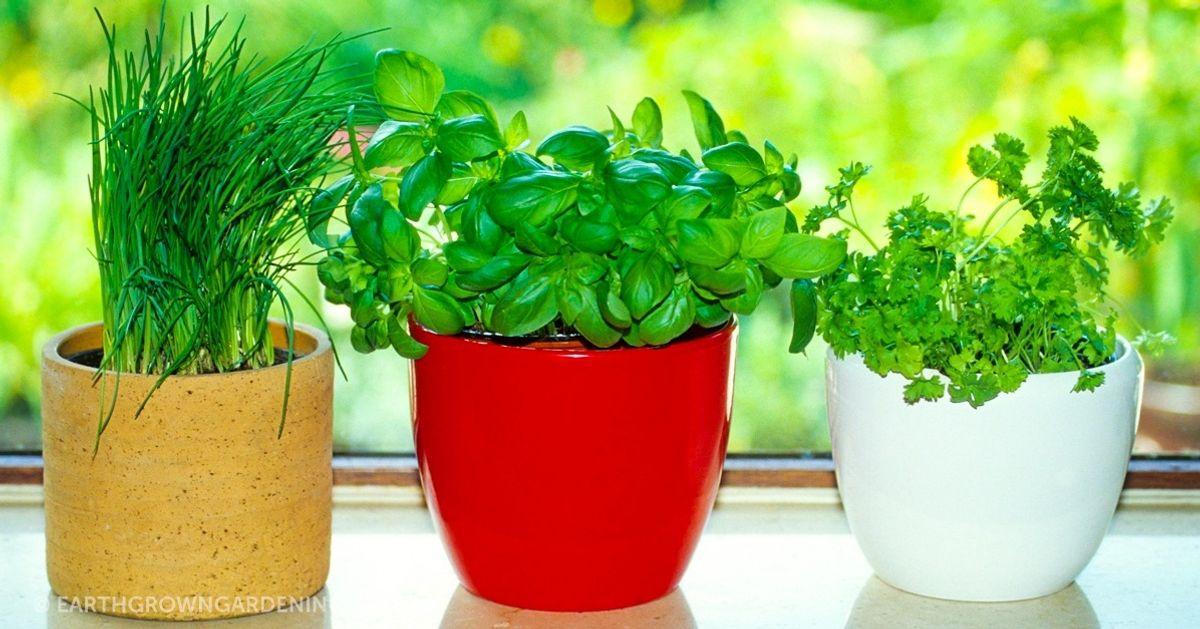 8Hierbas aromáticas que son fáciles deplantar encasa