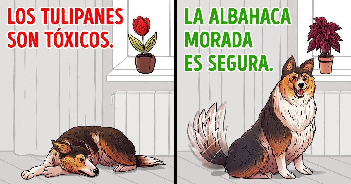 15 Plantas que debes evitar si tienes mascotas
