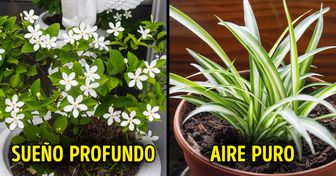 15 Plantas de interior que son buenas para tu salud