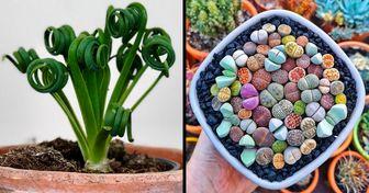 18 Plantas de interior que pueden aportar más vida a tu hogar por su aspecto de fantasía
