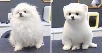 17 Personas que llevaron a su perro al peluquero y recibieron una mascota completamente diferente