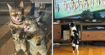30 gatitos que nos dejaron una sonrisa en el rostro al pararse en dos patas como si fueran humanos