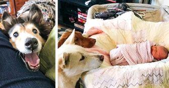 20Personas ysus mascotas que parecen haber sido creados para formar ungran equipo