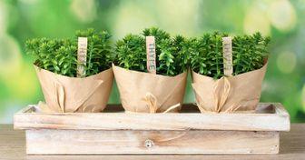 12Verduras que puedes cultivar entucasa