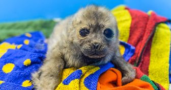 Lahistoria dePequeñín, una foca que, alparecer, secree gato