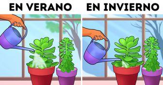 16 Eficaces consejos compartidos por lectores de Genial para el cuidado de plantas de interior