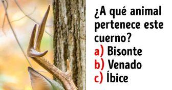 Test: intenta adivinar qué animal es solo con ver su cuerno