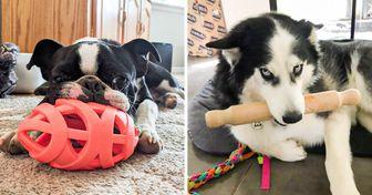 15+ Mascotas que gozan de sus juguetes favoritos sin importar el lugar y las circunstancias