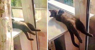 16 Personas mostraron cómo se acuestan sus gatos, y no verás nada más encantador el día de hoy