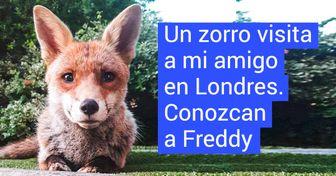 21 Zorros a los que les encanta visitar la casa de los humanos, y fueron captados infraganti