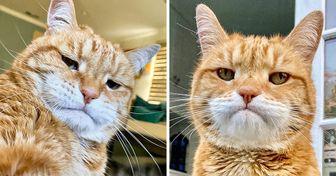 """Conoce a Marley, un gato que nació con cara de """"lunes por la mañana"""""""