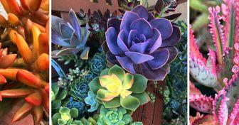 25 Plantas suculentas nos demuestran que pueden ser la mejor manera de darle color a la vida (y un bono sobre sus cuidados)