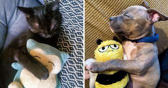 21 Fotos de mascotas que no van a ninguna parte sin su juguete preferido
