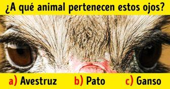 Test: intenta darte cuenta de a qué animales pertenecen estos ojos