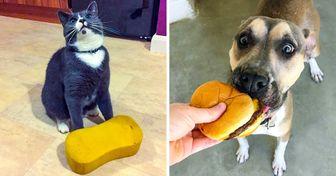Usuarios comparten enlared fotos emocionales desus mascotas que sevolvieron locas con sus regalos
