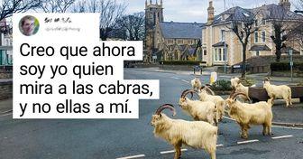 """Unas cabras se """"apoderaron"""" de un pueblo galés, dejando a sus habitantes boquiabiertos"""