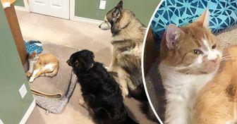20+ Usuarios de la red mostraron a los ladrones que roban las camas de sus perros, y (casi) todos son gatos