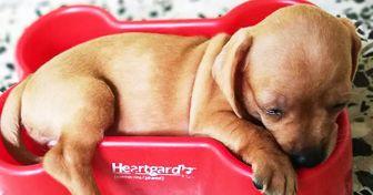 30 Usuarios de Genial compartieron fotos de sus mascotas durmiendo y no podemos soportar tanta ternura