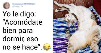 20 Usuarios de Genial revelan la chistosa manera en que conversan con su mascota tal como si fuera otra persona