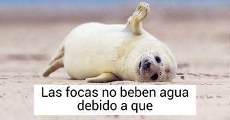 20 Datos que quizás no conocías sobre las focas (y fotos adorables que nos hicieron enamorarnos de ellas)