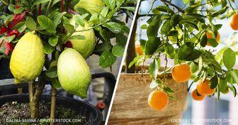 Frutas que puedes cultivar entucasa oincluso enlaoficina