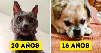 15+ Usuarios de Genial demostraron que sus mascotas mayores siguen siendo las consentidas de casa