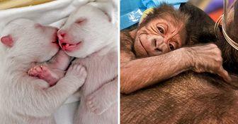 18 Animales recién nacidos que saben cómo ser tiernos desde el principio
