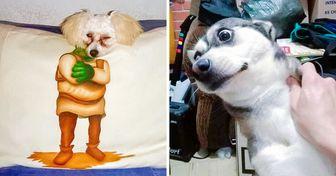 20 Lectores de Genial compartieron fotos tiernas y graciosas de sus mascotas (nueva selección)