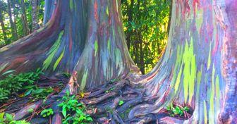 10 Árboles del mundo que llaman la atención no solo por sus colores, sino también por sus asombrosas características
