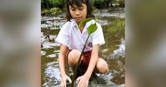 En Filipinas se aprobó una ley que obliga a los estudiantes a plantar 10 árboles para poder graduarse