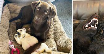 20+ Perros que no estaban preparados para conocer a un nuevo integrante de la familia