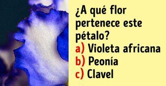 Test: Intenta adivinar qué flor es con solo ver un pétalo