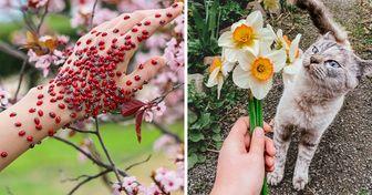 Las personas muestran cómo se ve la primavera alrededor del mundo