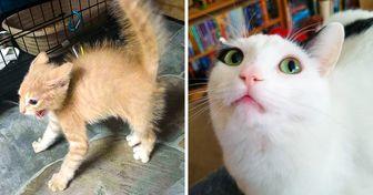 Mira estas graciosas reacciones de gatos que fueron sorprendidos