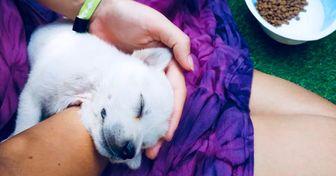 Este hotel de Bali es un paraíso para los turistas y también para los perritos rescatados