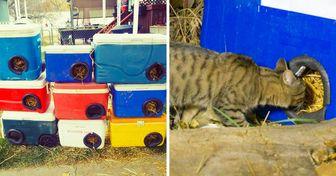 Un hombre construye refugios para los gatos sin hogar reciclando hieleras viejas