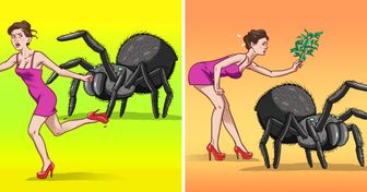 9 Maneras de mantener a las arañas e insectos fuera de tu casa