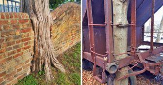 25 Fotos de árboles que parecen no haber comido nada desde hace días