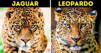 16 Grupos de animales que casi siempre son confundidos