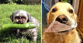 22Tesoros que estos perros les dieron asus dueños