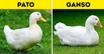15 Dúos de animales casi idénticos que son muy fáciles de confundir