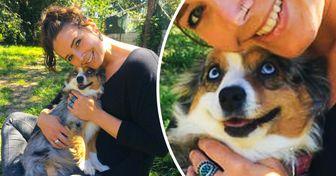 20+ Mascotas que demuestran el amor por su humano con una simple mirada