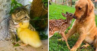 20 Adorables situaciones en las que los animales intentaron llevarse bien
