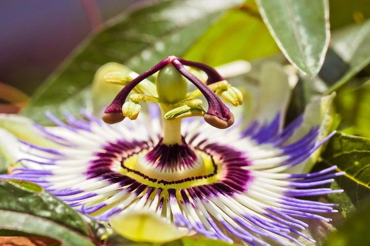 5 Species of Flowers That Can Bring Color and Life to the Garden