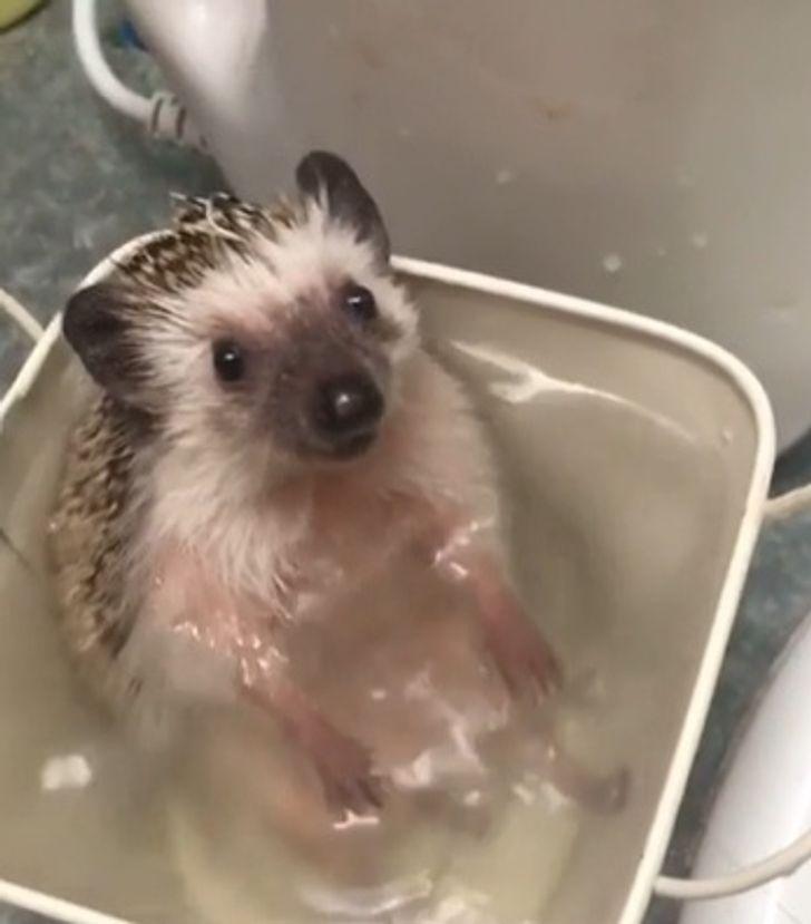 20 Mascotas recién bañadas que tienen una o dos cosas para decirles a sus dueños (aunque algunas hasta lo disfrutaron)
