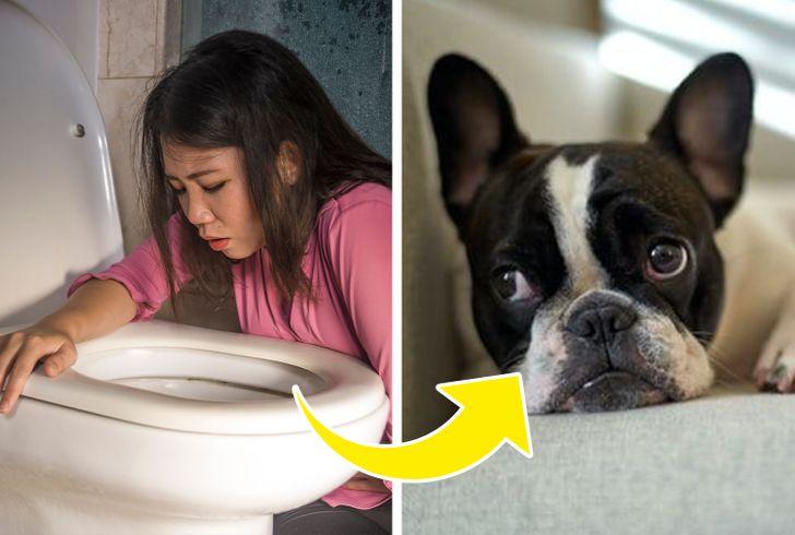 Por qué tu perro te sigue cuando vas al baño